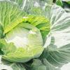 キャベツは健康食品!キャベジンでも知られている胃の特効薬に!